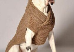 sweater season for dogs