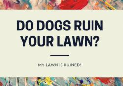 My Lawn Is Ruined!